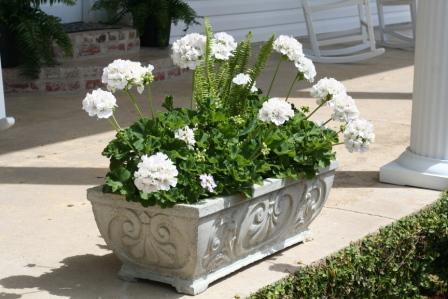 Flower box sm