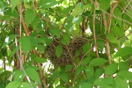 Hidden nest sm