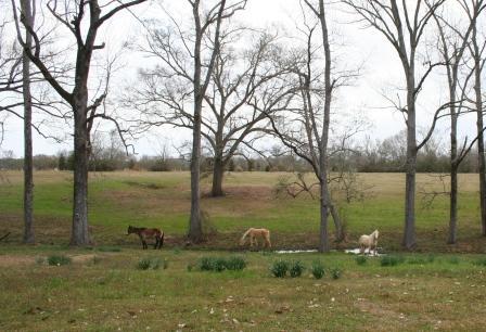 Horses a visiting