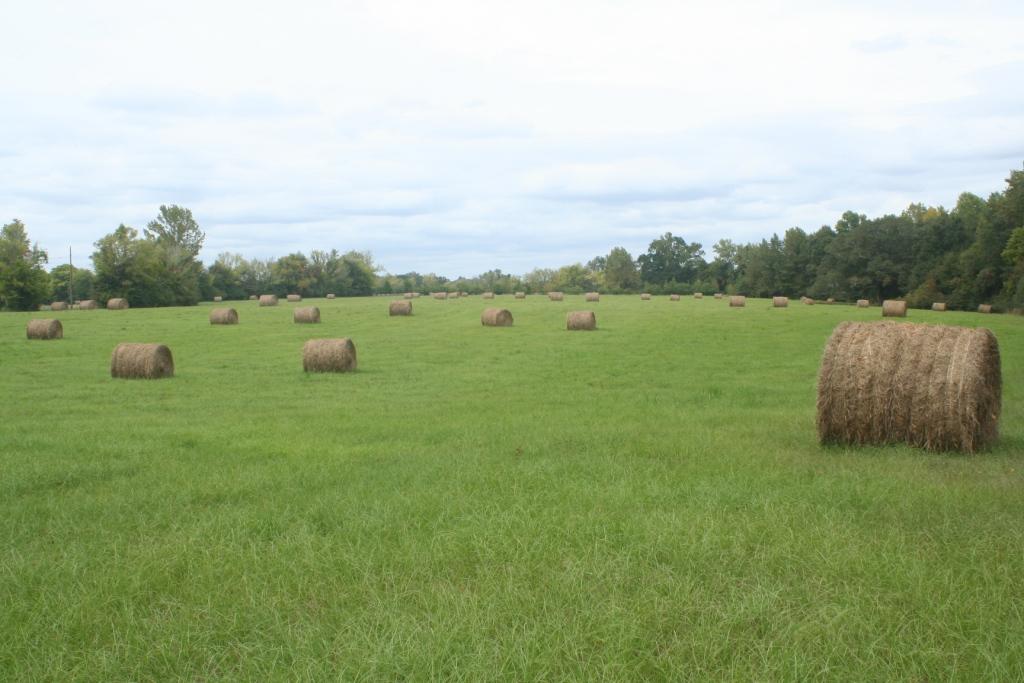 hayfield 2
